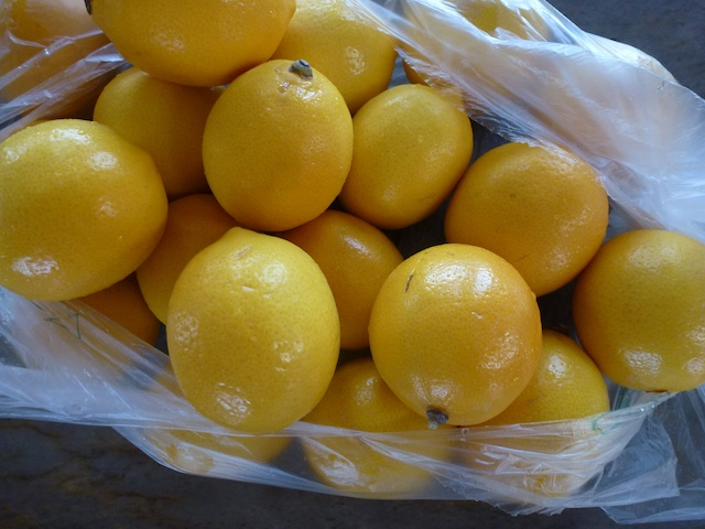 Lemons in a bag