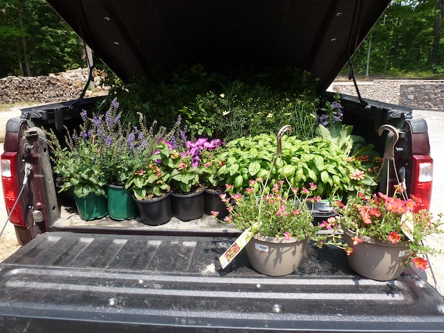 Pick up loaded with plants