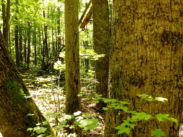 Forest walk 7:2012