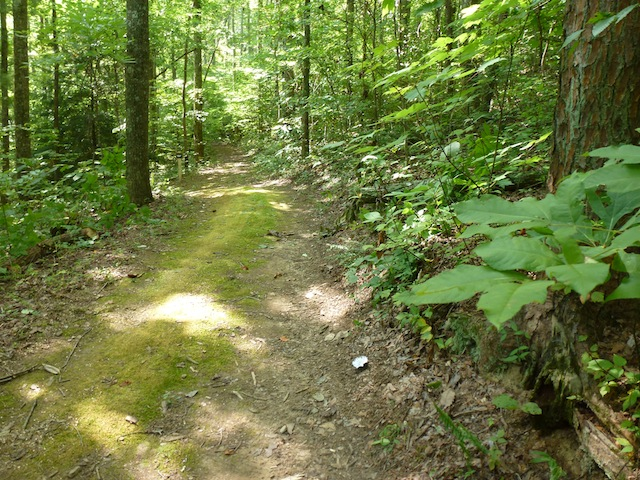 Trail with mushroom