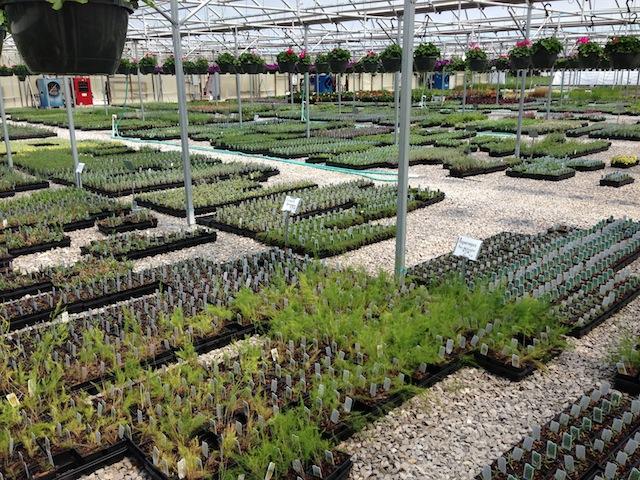 Mary's greenhouse